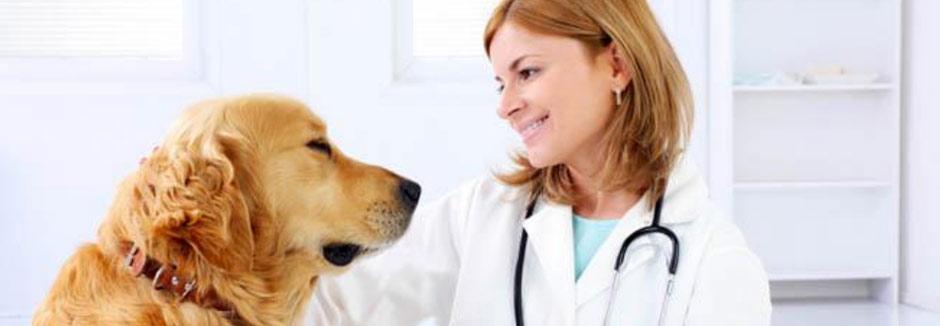 Лечение кошек в ветеринарной клинике Мос-Вет 24 - Хорошевский